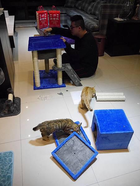 豪華貓爬架 貓跳台 貓窩 貓屋 貓吊床 貓玩具 (23)