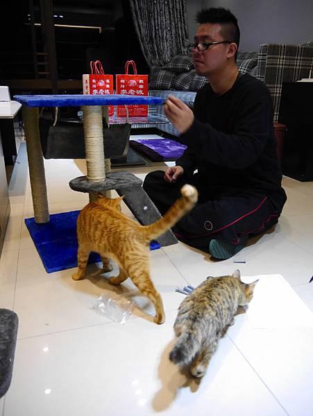 豪華貓爬架 貓跳台 貓窩 貓屋 貓吊床 貓玩具 (17)