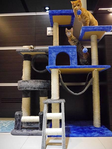 豪華貓爬架 貓跳台 貓窩 貓屋 貓吊床 貓玩具 (48)
