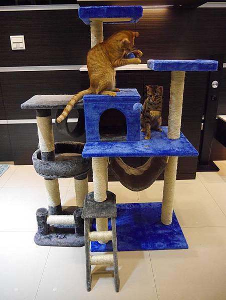 豪華貓爬架 貓跳台 貓窩 貓屋 貓吊床 貓玩具 (41)