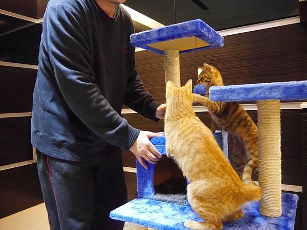 豪華貓爬架 貓跳台 貓窩 貓屋 貓吊床 貓玩具 (46)