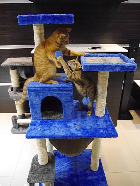 豪華貓爬架 貓跳台 貓窩 貓屋 貓吊床 貓玩具 (39)