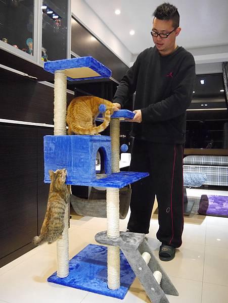 豪華貓爬架 貓跳台 貓窩 貓屋 貓吊床 貓玩具 (35)