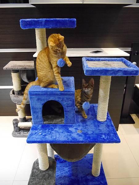 豪華貓爬架 貓跳台 貓窩 貓屋 貓吊床 貓玩具 (38)
