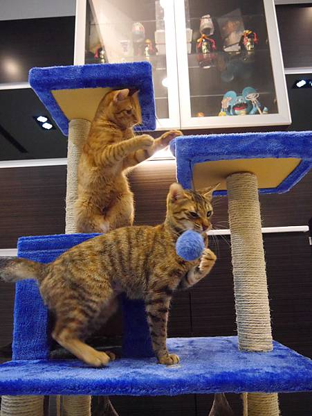 豪華貓爬架 貓跳台 貓窩 貓屋 貓吊床 貓玩具 (43)
