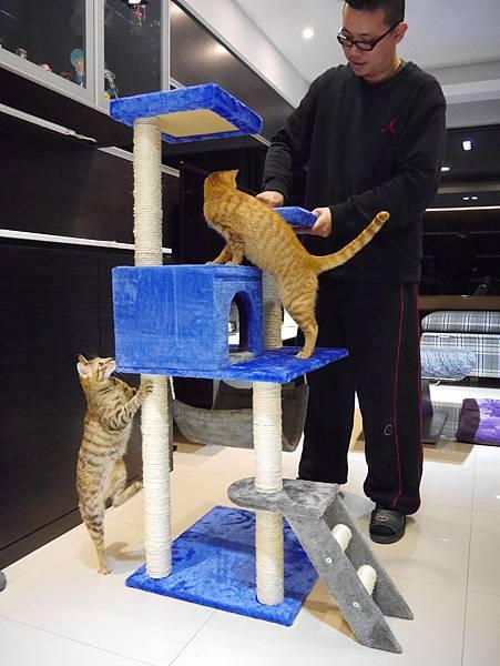 豪華貓爬架 貓跳台 貓窩 貓屋 貓吊床 貓玩具 (34)