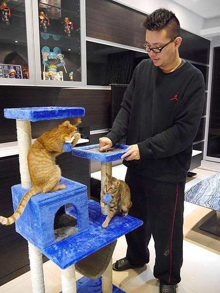 豪華貓爬架 貓跳台 貓窩 貓屋 貓吊床 貓玩具 (36)