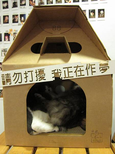 小春日和 動物雜貨   珈琲 (42)