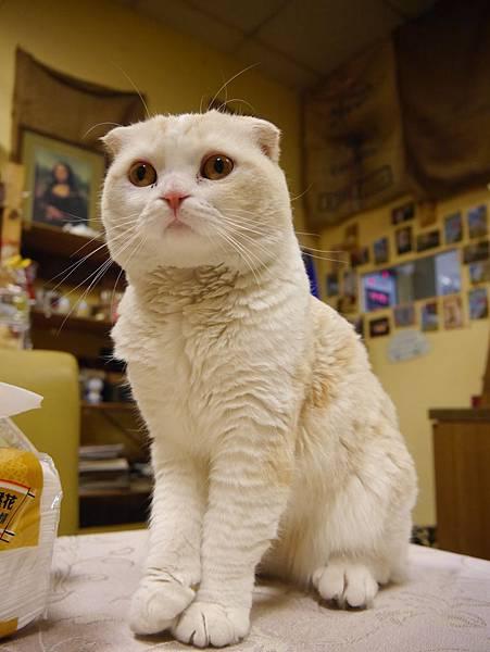 咕嚕咕嚕貓咖啡 (10)