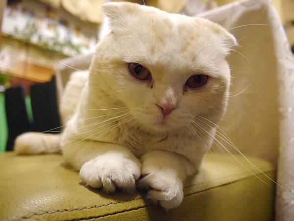 咕嚕咕嚕貓咖啡 (22)