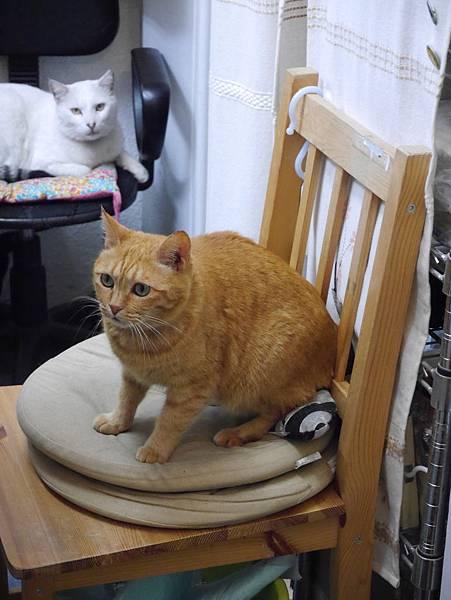 5沖縄工房 猫の家 (21)