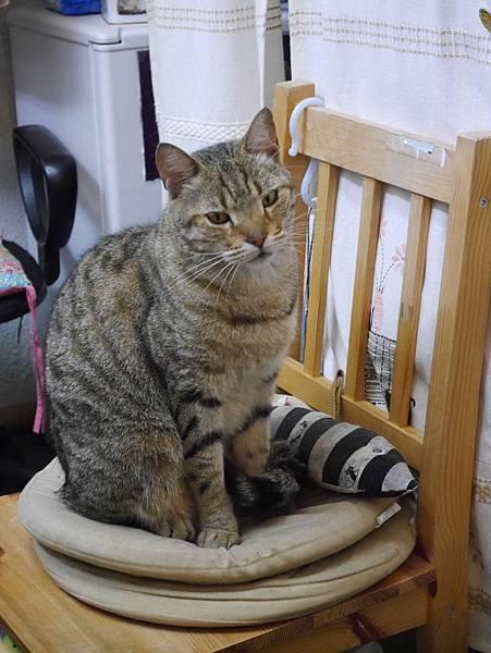 5沖縄工房 猫の家 (7)