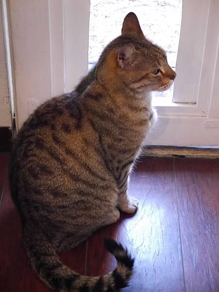 5沖縄工房 猫の家 (10)