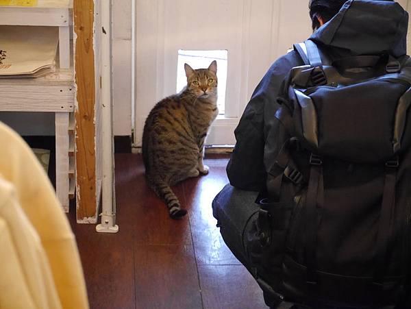 5沖縄工房 猫の家 (8)