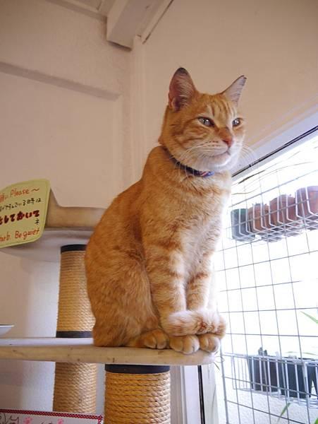 5沖縄工房 猫の家 (40)
