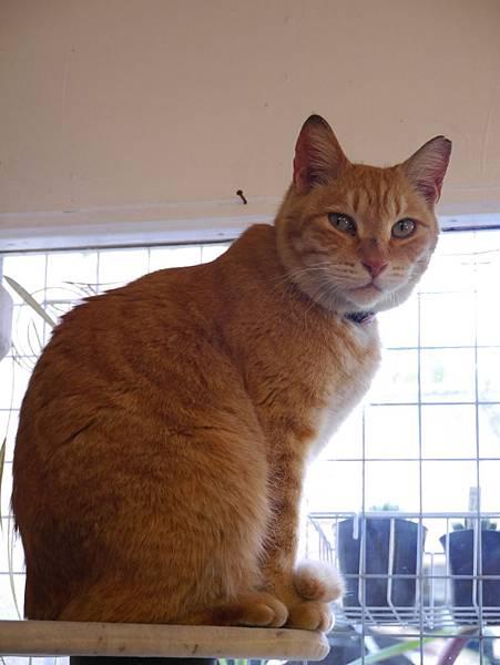5沖縄工房 猫の家 (31)