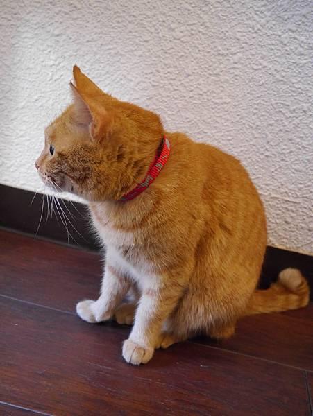 5沖縄工房 猫の家 (22)