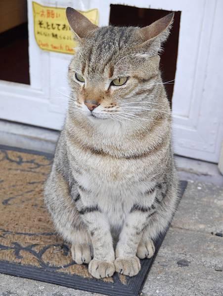 5沖縄工房 猫の家 (35)