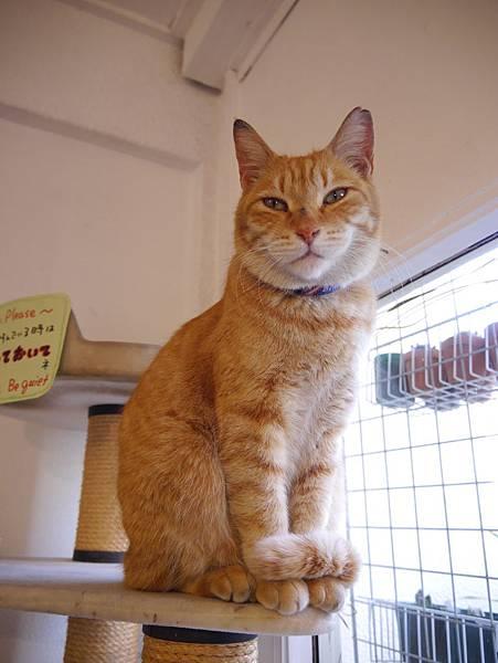 5沖縄工房 猫の家 (41)