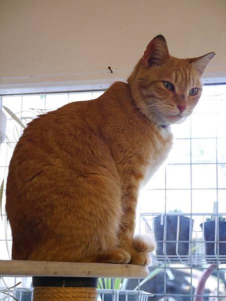 5沖縄工房 猫の家 (32)