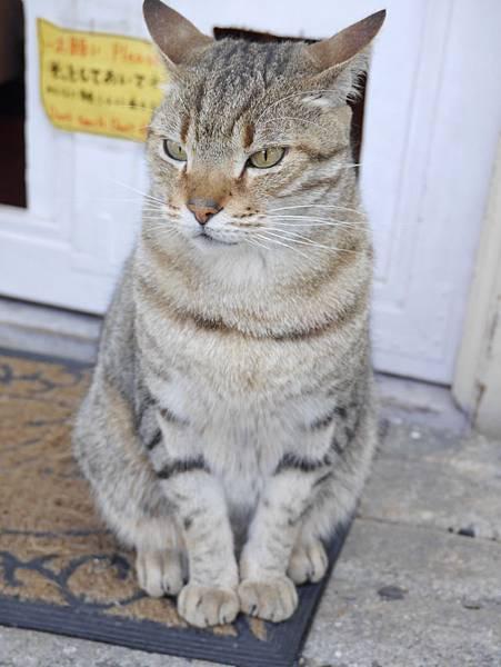 5沖縄工房 猫の家 (36)