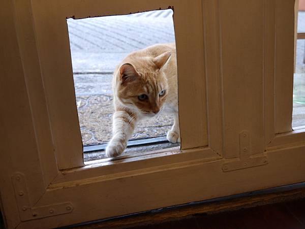 5沖縄工房 猫の家 (23)