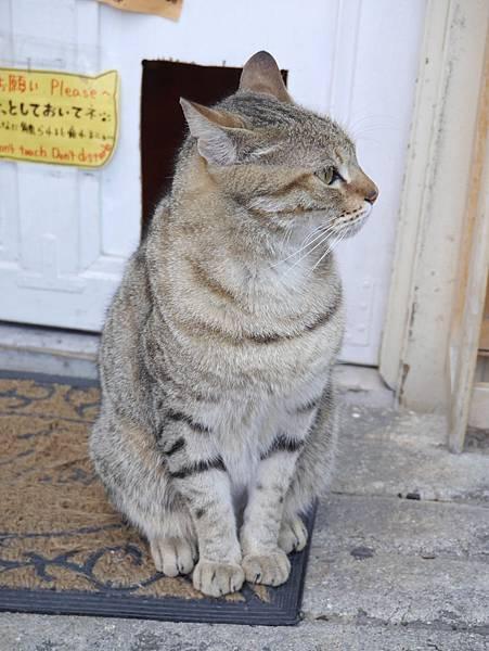 5沖縄工房 猫の家 (34)