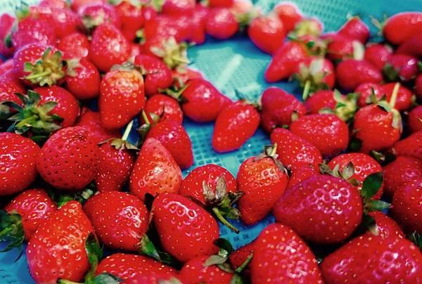 好茶 內科飲料外送 草莓紅茶 (11)