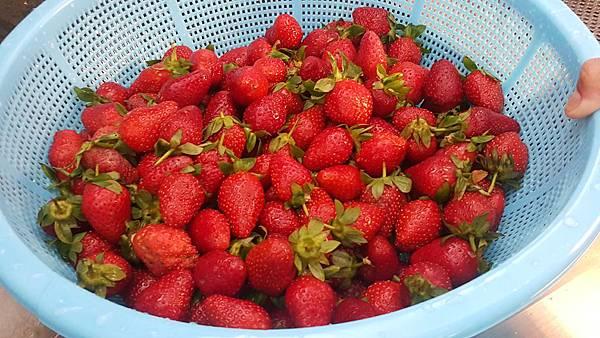 好茶 內科飲料外送 草莓紅茶 (4)