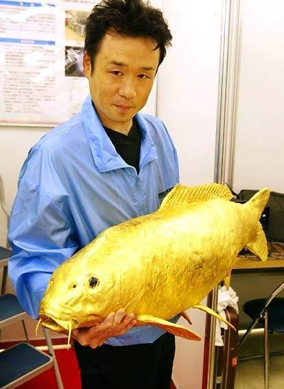 """什麼叫做\\\\\\\""""金\\\\\\\""""魚"""