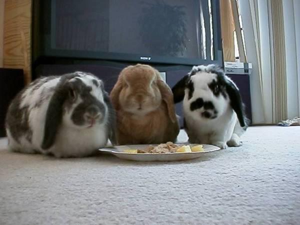 好肥的兔兔~