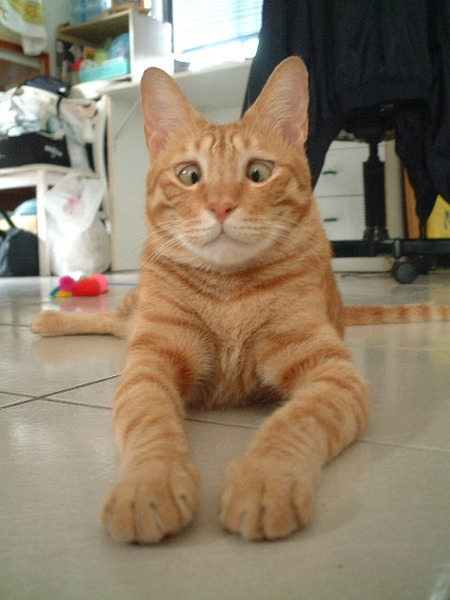 鬥雞眼的貓