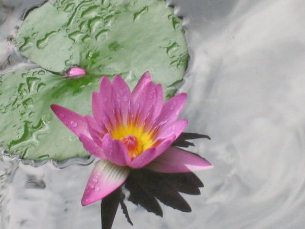 其實這是一池蓮花池