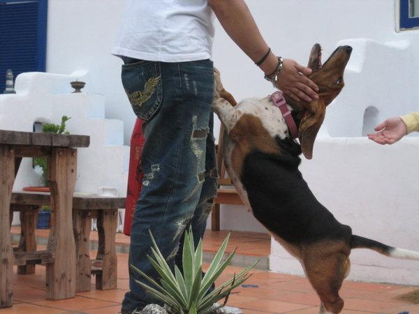 超HIGH的狗狗