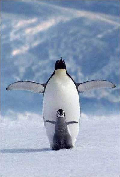 鐵達尼號企鵝版