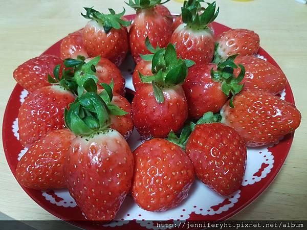 草莓超好吃