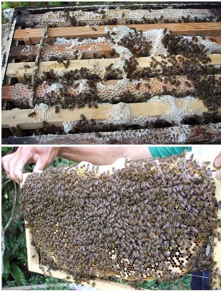 蜂蜜3.jpg