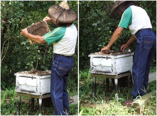 蜂蜜4.jpg