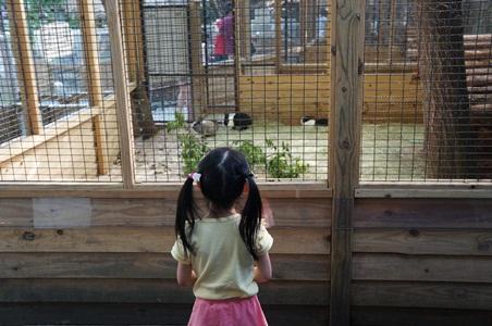 動物園173