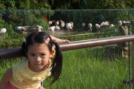 動物園251