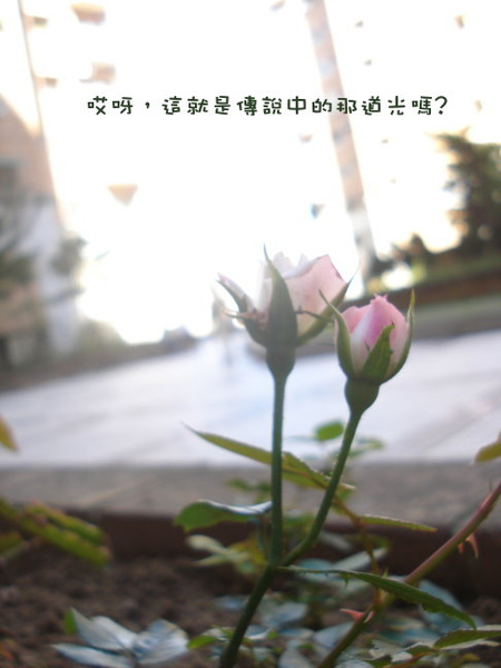 DSC03669-1.jpg
