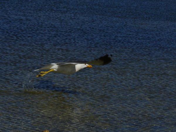 Mono Lake_gull 1.jpg