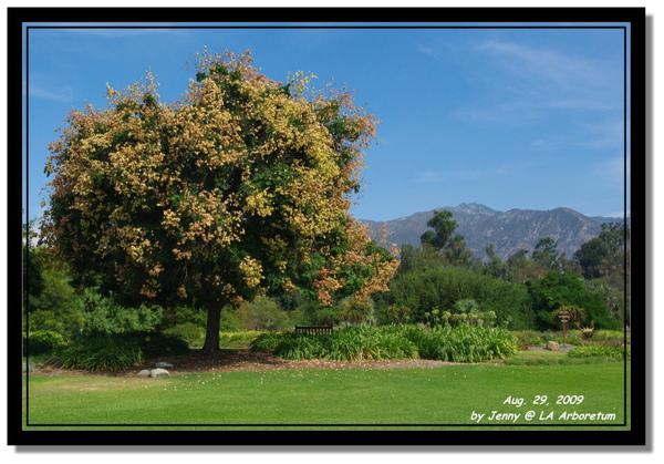 LA Arboretum 4.jpg