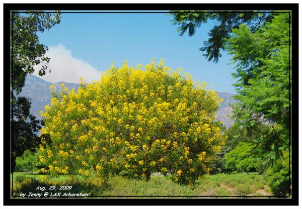 LA Arboretum 109.jpg