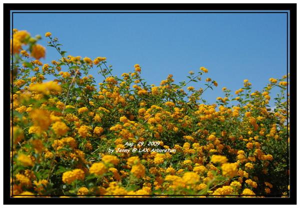 LA Arboretum 113.jpg