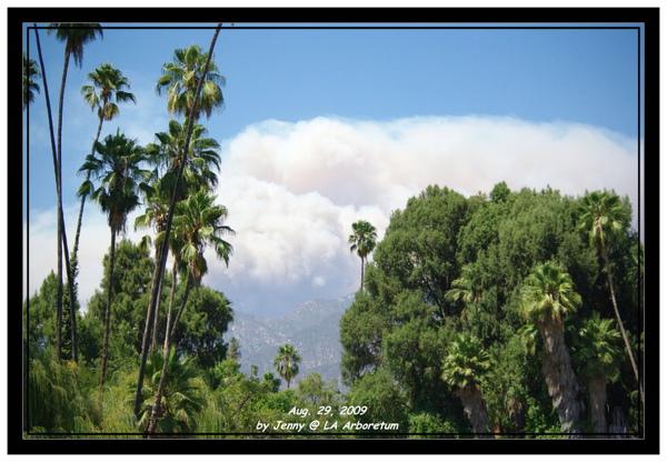 LA Arboretum 114.jpg