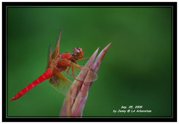 IMGP5483 frame.jpg