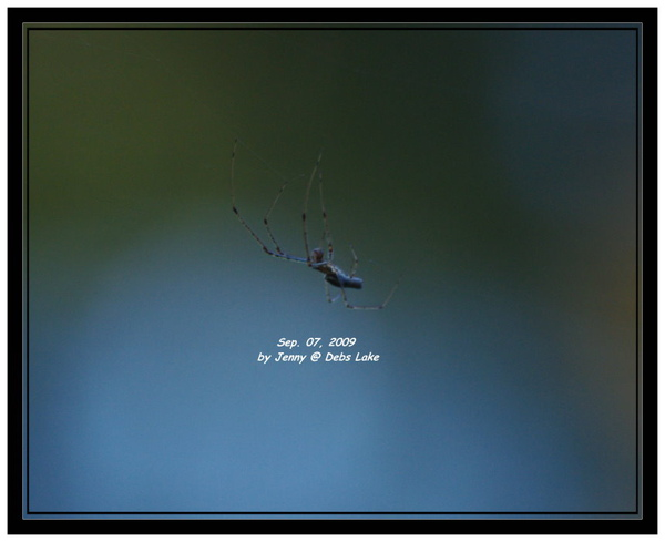 IMGP5931_frame.jpg