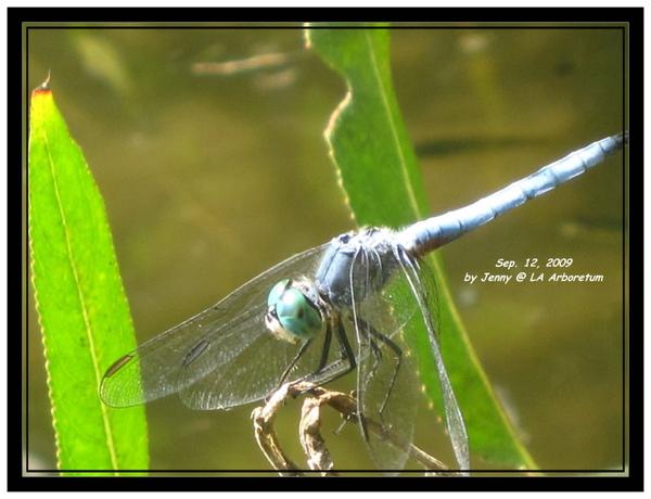 IMG_0619 frame.jpg
