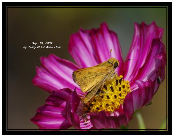 IMGP6414 crop frame.jpg